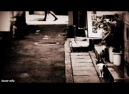 街猫223