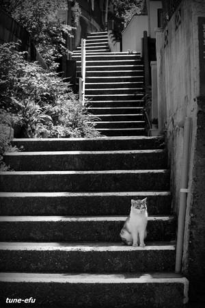 街猫224