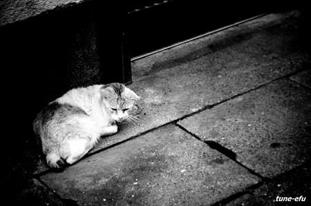 街猫230