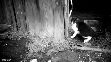 街猫239