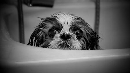 お風呂の時間