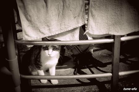 街猫243