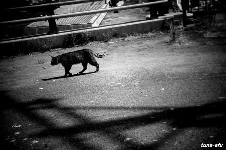 街猫244