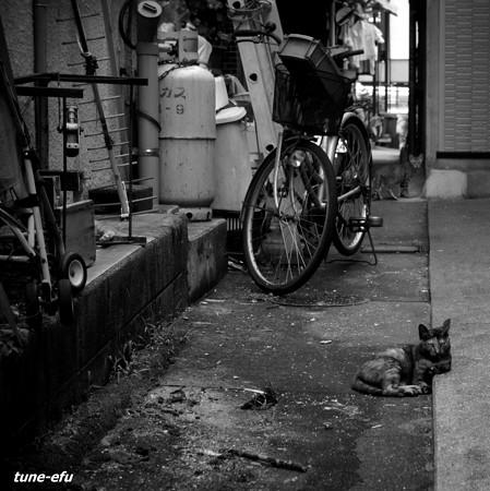 街猫268