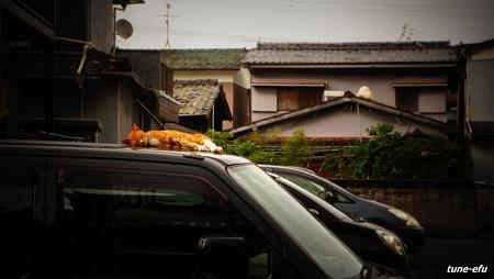 街猫278