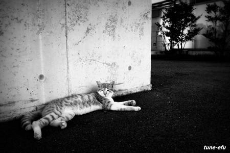 街猫281