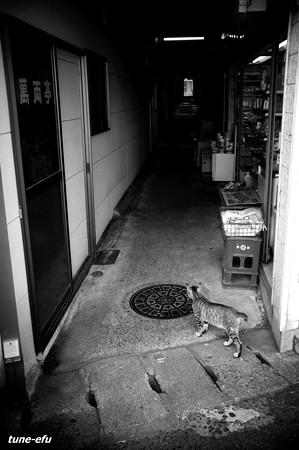 街猫283