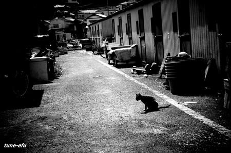 街猫305