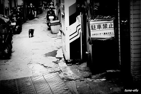 街猫307