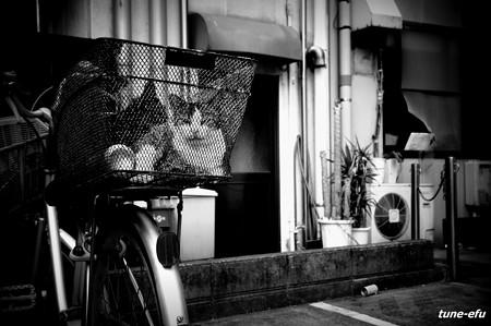 街猫309