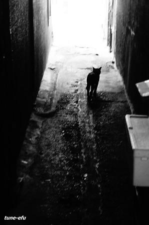 街猫310