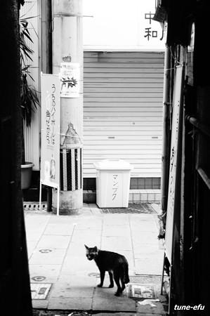 街猫315