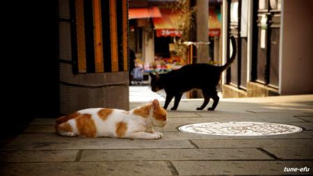 街猫326
