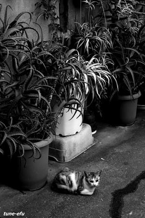 街猫328