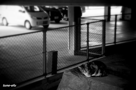 街猫336