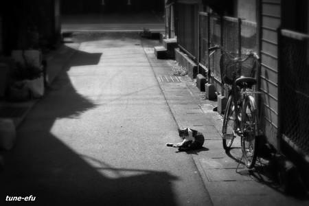 街猫341