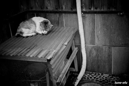 街猫349