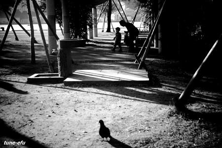 おじいちゃんと僕と鳩