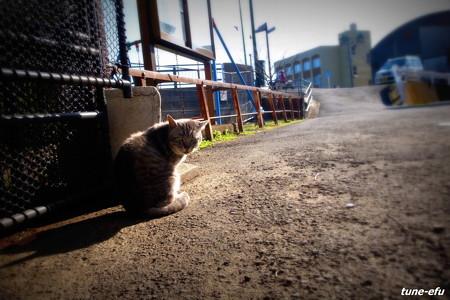街猫367