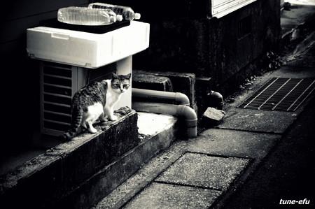 街猫370