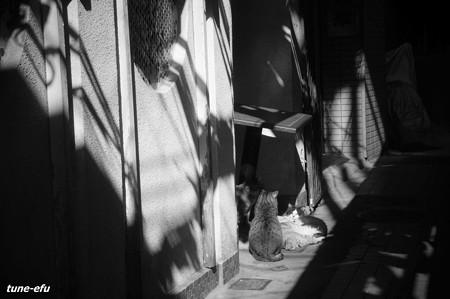 街猫384
