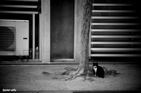 街猫386