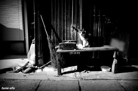 街猫392