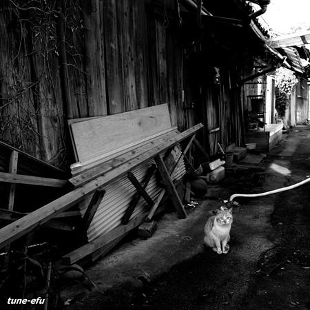 街猫398