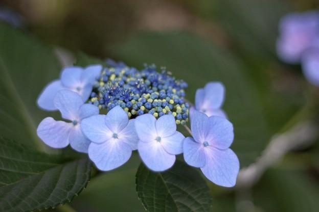 写真: 日陰の花