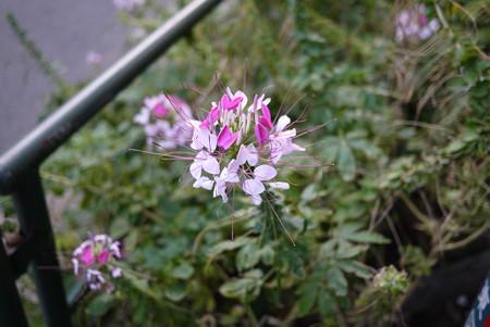 道ばたに咲く花