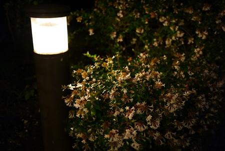街灯と花と