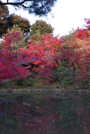 臥龍池に浮かぶ紅葉