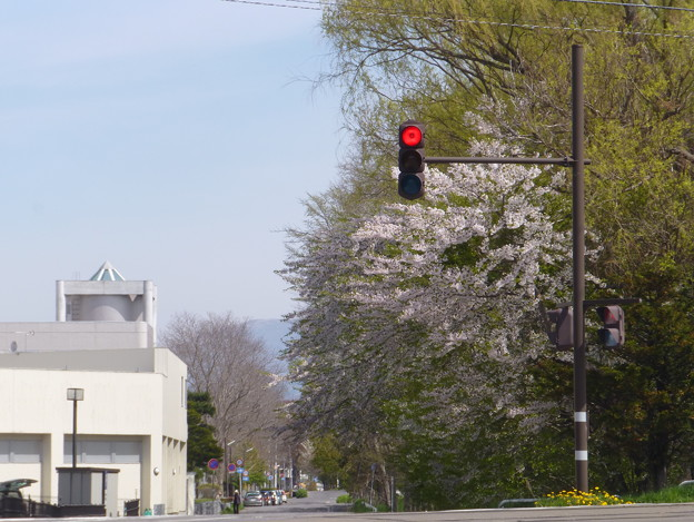 いま、ふたたびの春へ