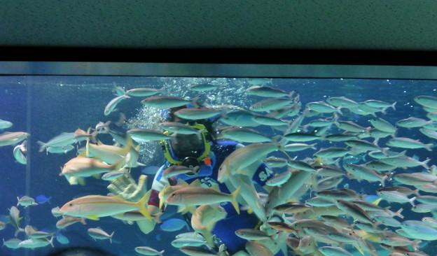 海のワルツ