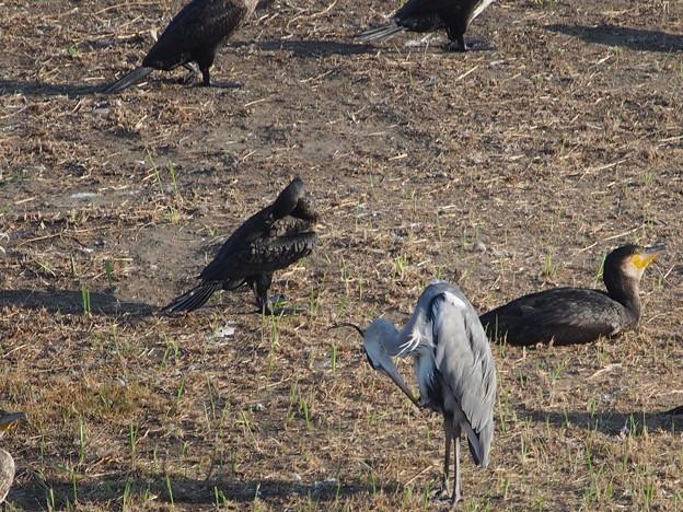 他鳥の空似