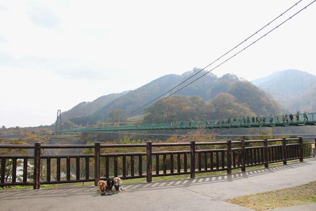 もみじ谷大吊橋とコラボ