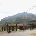Photos: もみじ谷大吊橋とコラボ