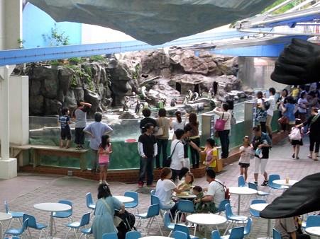 20120715 松島 ペンギンプール01