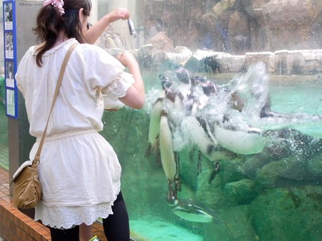 20120715 松島 ペンギンランチ03