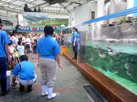 20120715 松島 ペンギンランチ01
