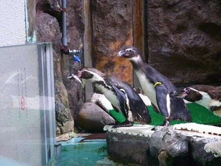 20120715 松島 ペンギンランチ08
