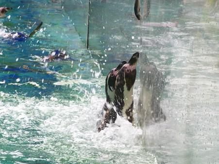 20120715 松島 ペンギンランチ10