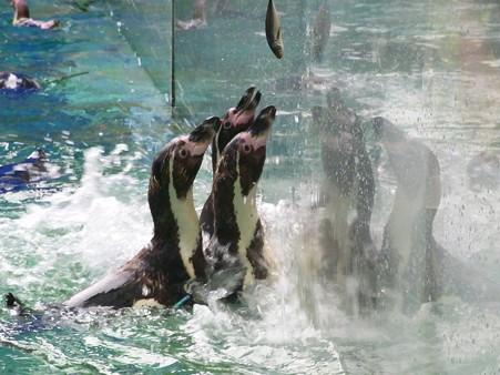 20120715 松島 ペンギンランチ11