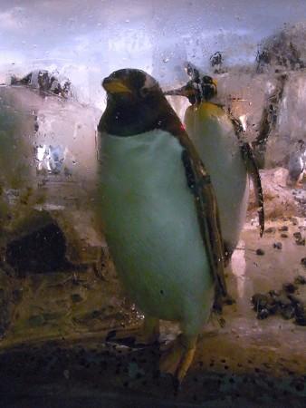 20120909 のんほい よりぬき極地館12