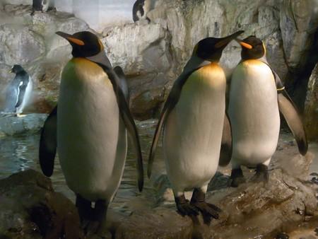 20120909 のんほい よりぬき極地館11