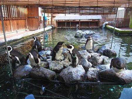 20121222 掛川 こどもたち01