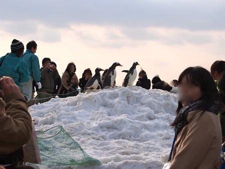 20130120 名古屋港 雪山ジェンツー48