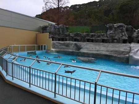 20121222 日本平 ペンギンプール03