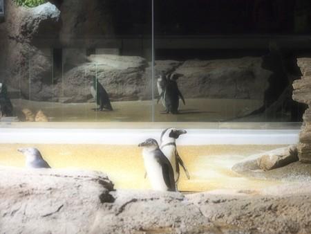 20130209 京都水 夜の水族館03