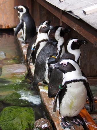 20130224 掛川 ペンギン長屋